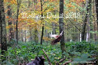 Molliens-Dreuil